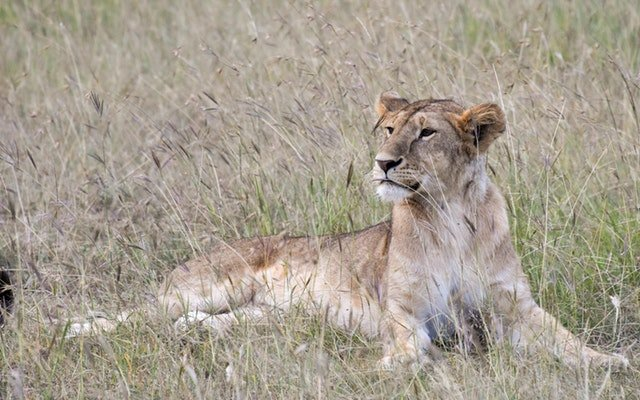 Police search for possible lioness roaming French countryside