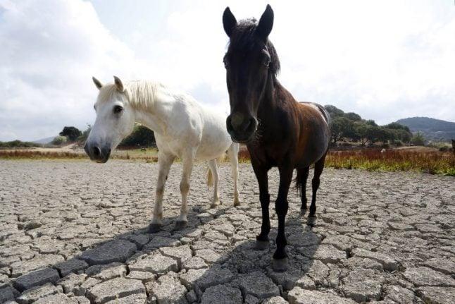 Spanish police smash Europe-wide dodgy horsemeat racket