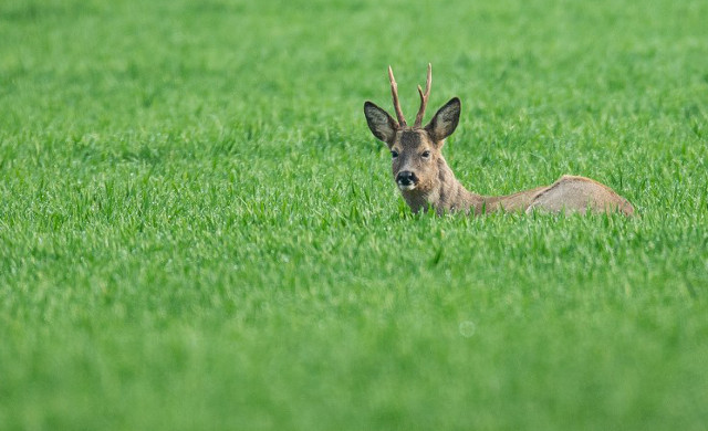 France: Hunt begins for violent Dordogne deer