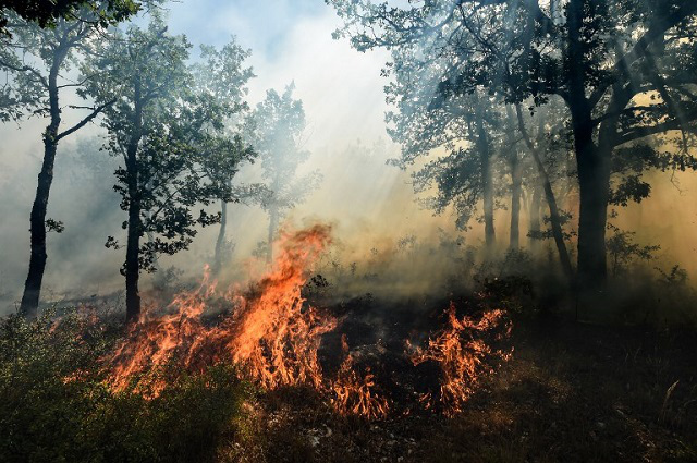 IN PICTURES: Fires continue to devastate France