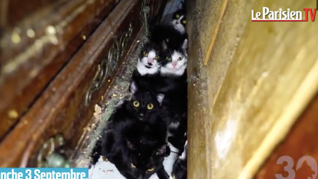VIDEO: Police free 130 cats kept in one-room Paris apartment