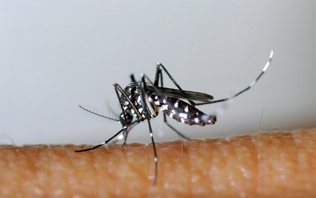Analysis: Why malaria is unlikely to return to Italy