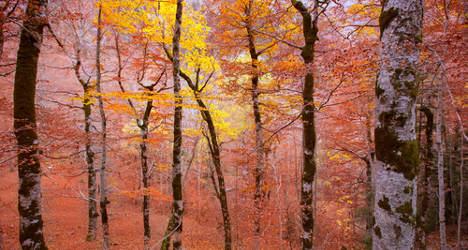 Ten of the greatest autumn getaways in Spain