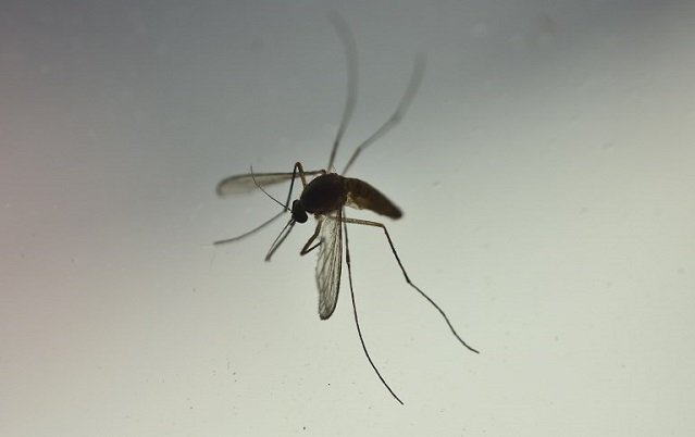 Four-year-old girl dies of malaria in northern Italy