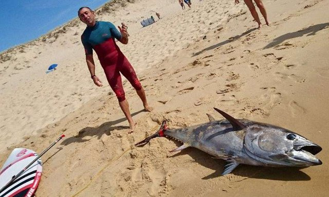 Frenchman lassoes 2-metre tuna, surfs to shore