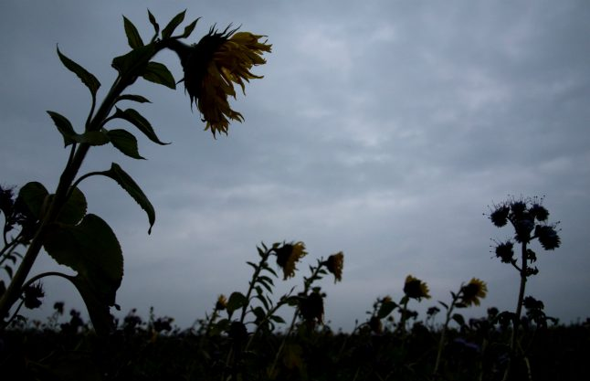November rain: gloomy weather expected across Germany this week