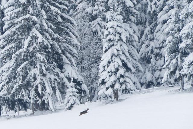 Ski resorts rejoice as Switzerland set for glacial weekend