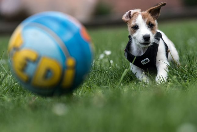 Why did Berlin dog owners pay over €11 million in 'dog tax' last year?