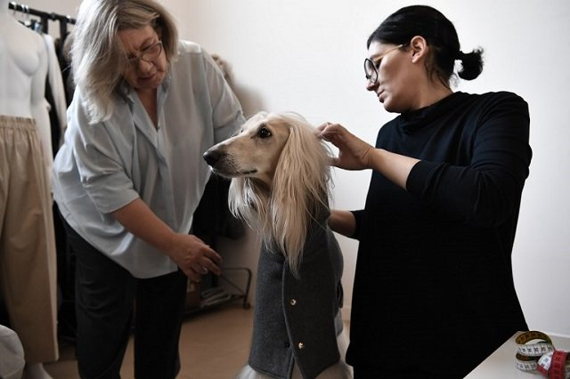 Canine couture: The Milan designer creating tailored outfits for dogs