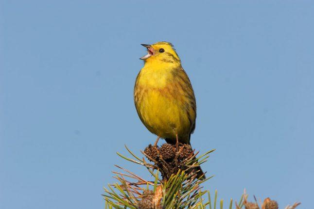 'Three million' birds flew from Denmark since 1970s: report