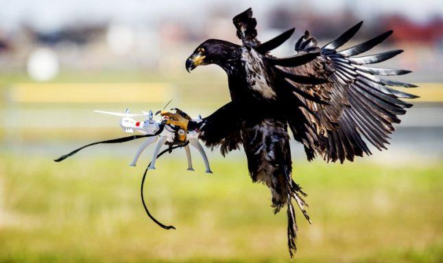 Geneva trains eagles in war on rogue drones