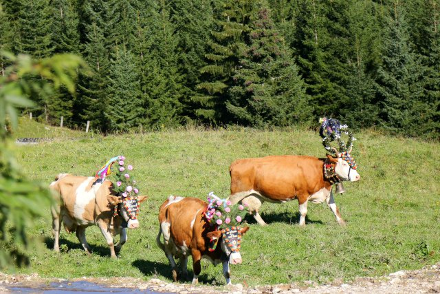 Austrian police stumped by spate of cowbell thefts