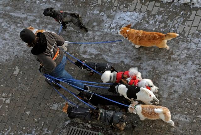 Swedish dog dies in mystery illness that has killed dozens in Norway