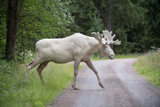 Watch: Ten of Sweden's most incredible wild animals