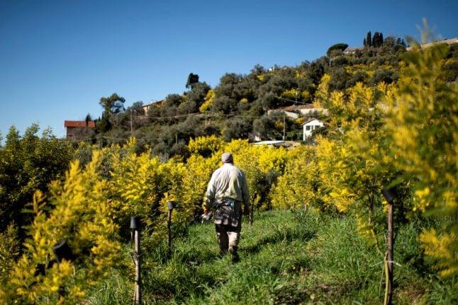 Why the coronavirus is hurting Italian farmers