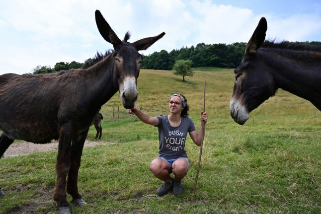 'This is where I want to be': The growing number of young Italians choosing life on the farm