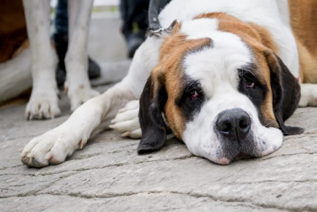 UPDATE: New rules on pet travel as UK granted 'listed status' by EU