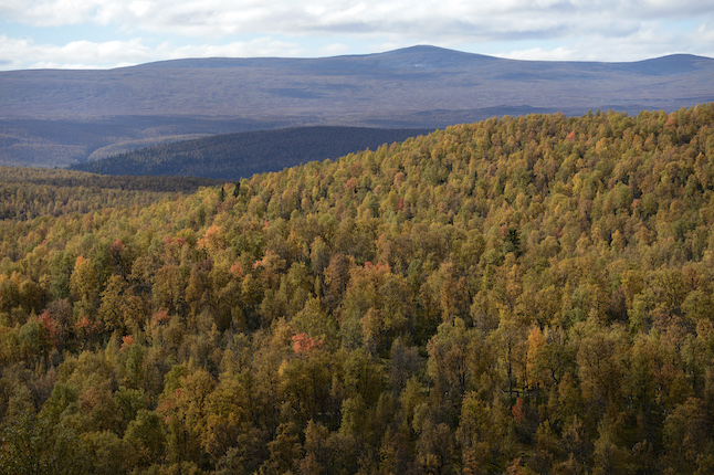 'Never have I seen so few old trees around': What's happening to Sweden's forests?