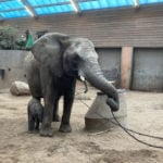 Swedish zoo's baby elephant dies after her family rejects her