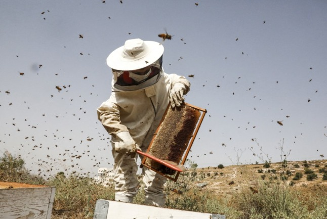 France issues health warning on 'aphrodisiac' honey