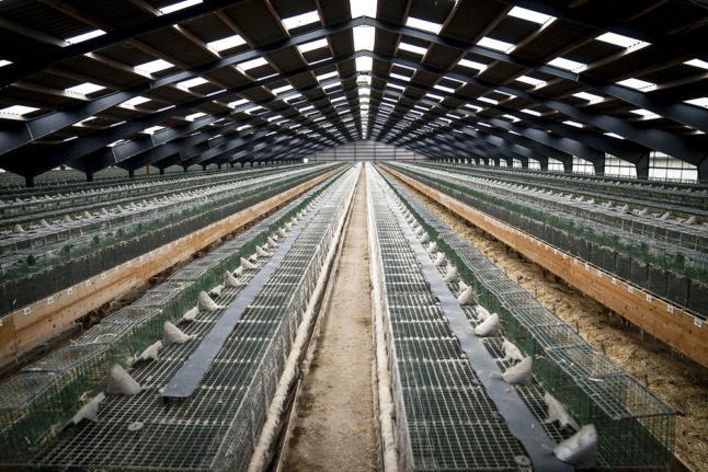 Denmark government backs extension of ban on mink farming