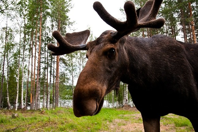 'Stop taking selfies with elk,' police warn Stockholmers